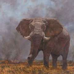 elephant_on_fire